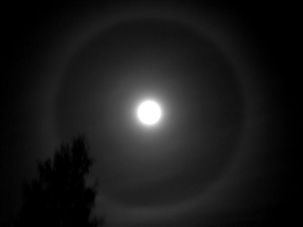 Kuu halo
